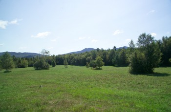 Whiteface Meadows