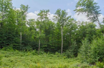 Mountain Lane Privacy - Lake Placid, NY