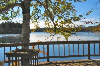 Tranquil Loon - Loon Lake, NY